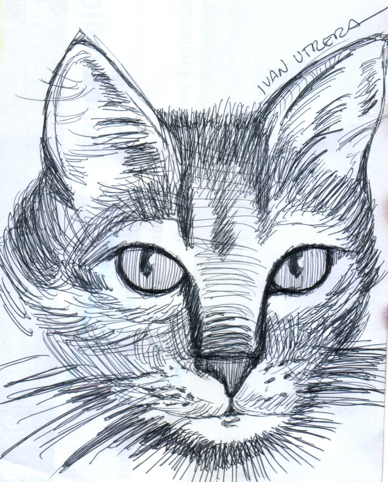 Dibujo Gato A Lapicero Psychedelic Art Cat Sketch Art