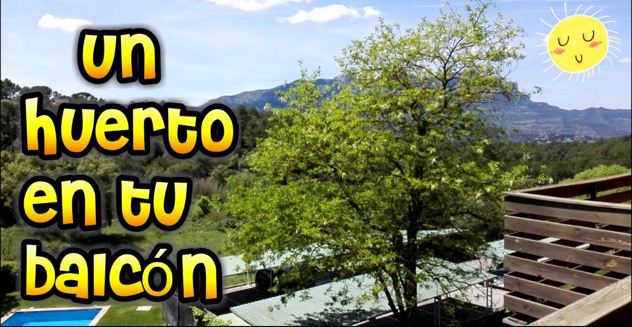 Como Hacer Un Huerto Urbano// Como Hacer Un Huerto Ecológico// Como Hace...