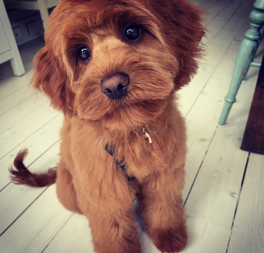 Pin On Dog Breeds