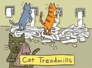 Cat Treadmills Hahaha I Came Home To This Every Day When I Left The Bathroom Door Open Stormy Loves Toilet Paper And The Funny Cats Cat Comics Crazy Cats