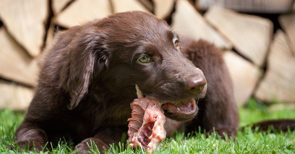 The right raw bones can save your dog's teeth and ...