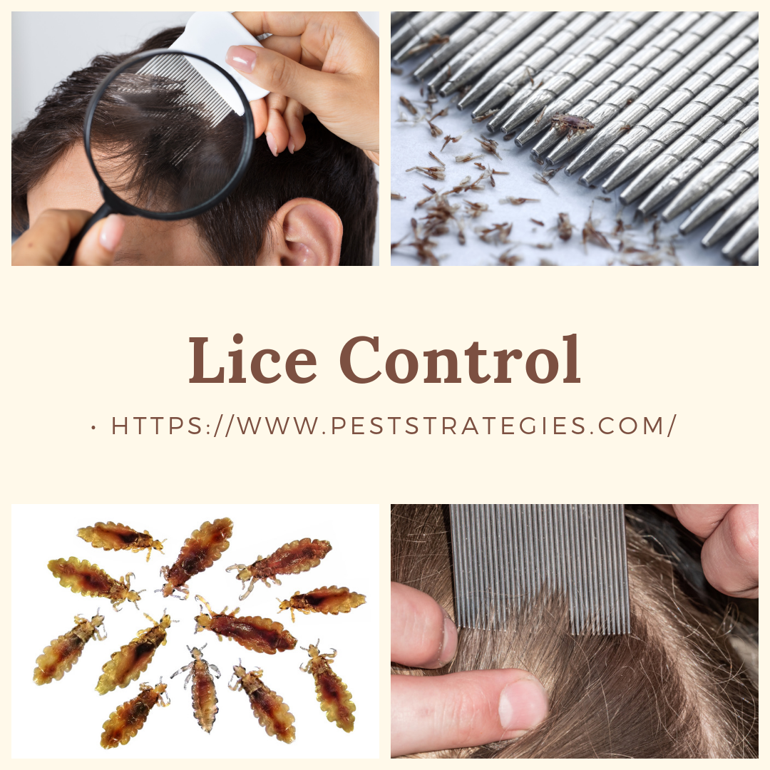 Lice is a parent's worst nightmare. Keep your child lice