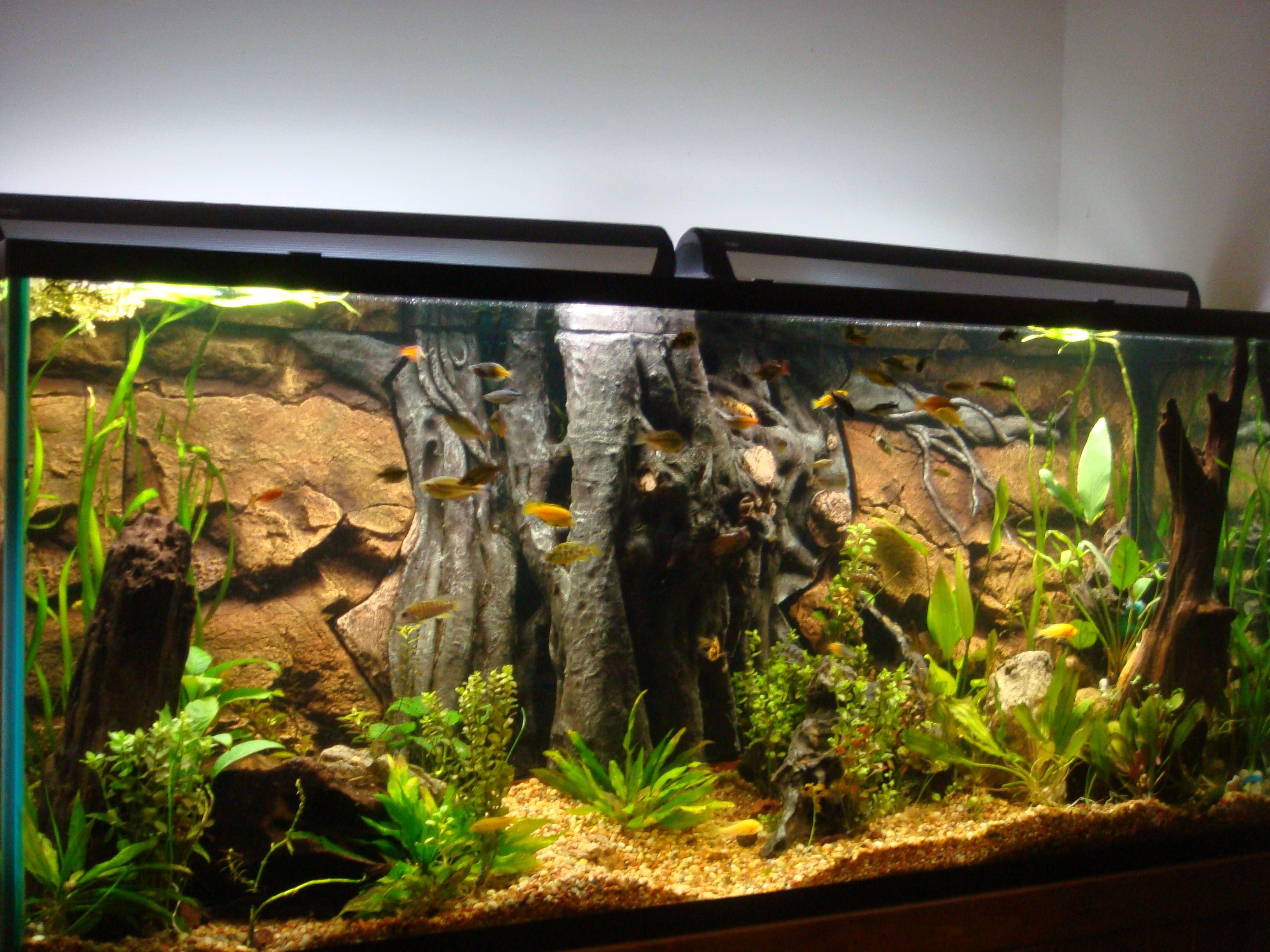 Amazing Aquarium Backgrounds Aquarium Fish Tank Fish Tank