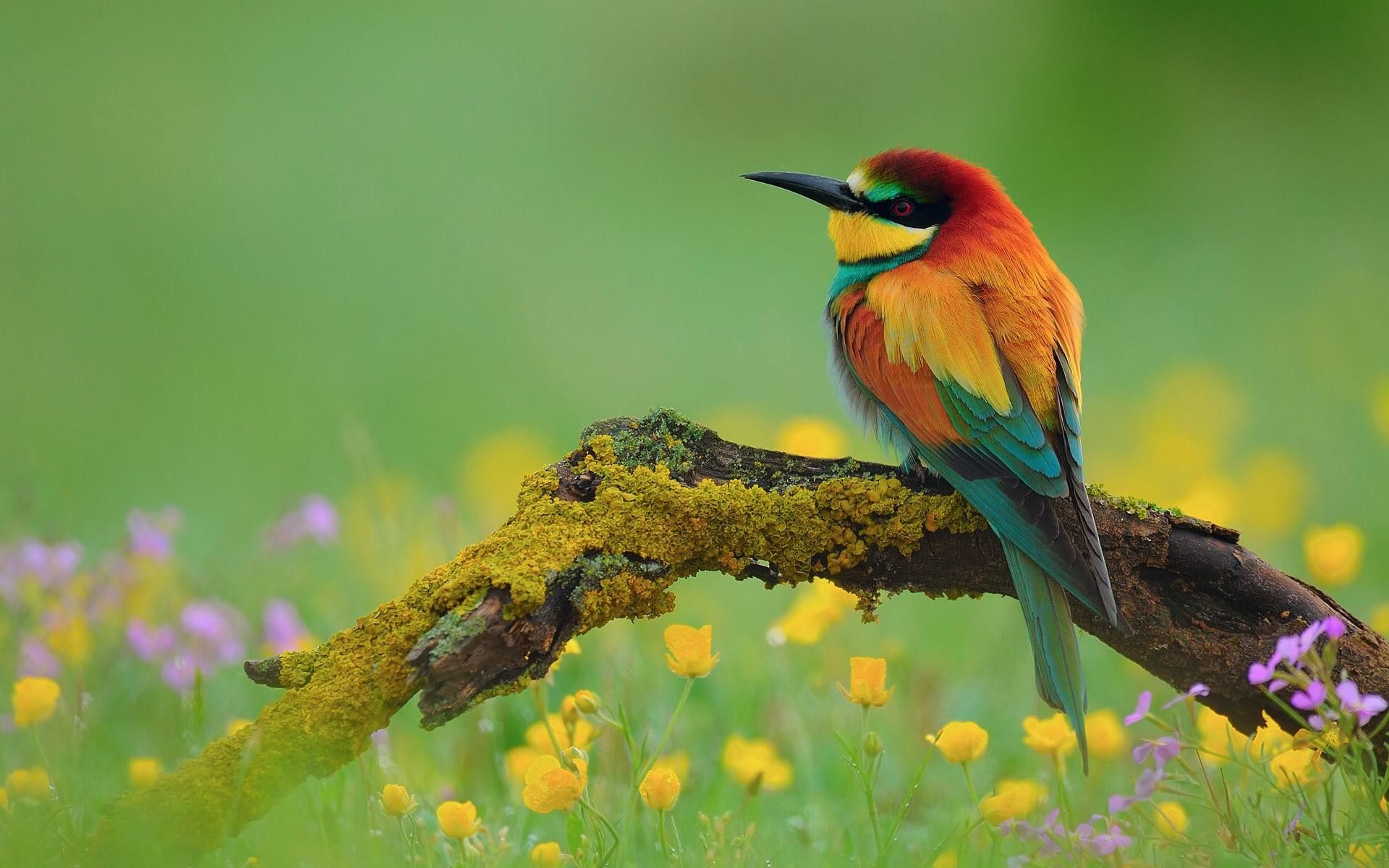 Birds Gorgeous Colorful Bird Birds Nature Animals Hd Wallpapers