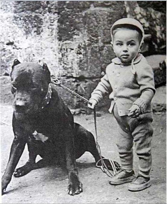 A Boy And His Pitbull Pitty And Dane Pitbulls Nanny Dog