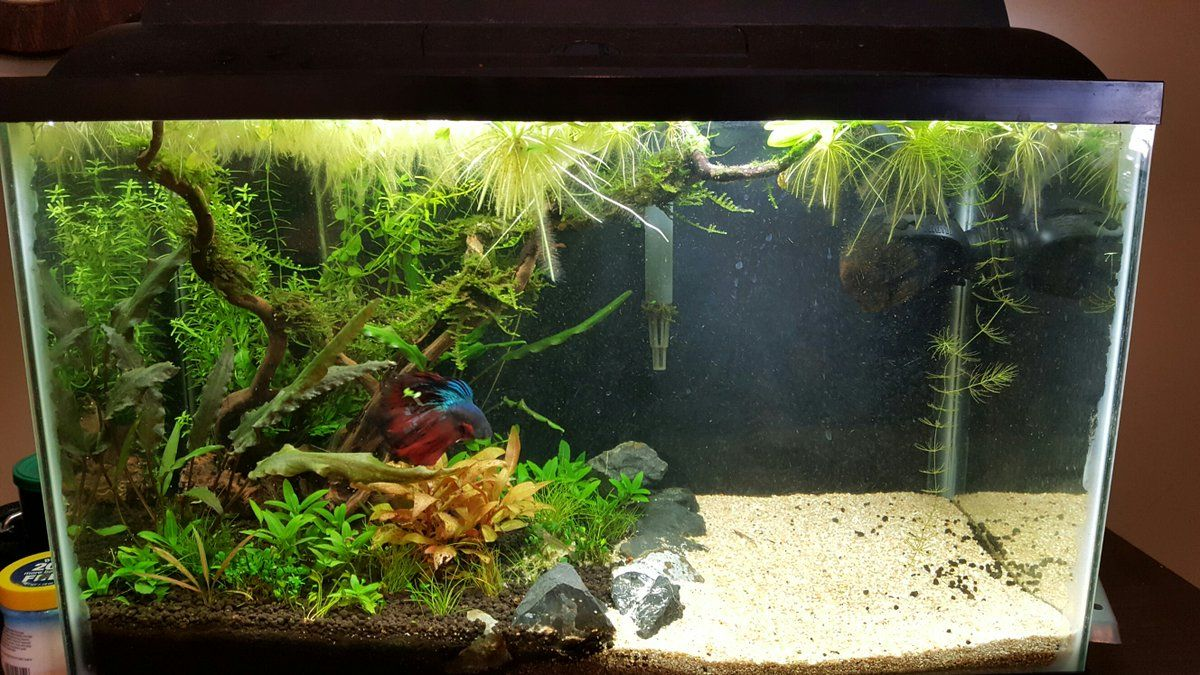 10 Cool Aquarium Decoration Ideas Fresh Water Fish Tank Cool