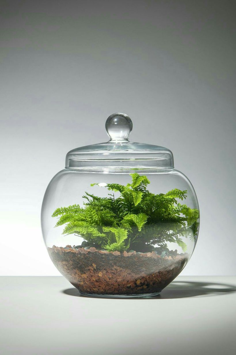 pingl par axel balme sur aquaterraoaysager terrarium. Black Bedroom Furniture Sets. Home Design Ideas