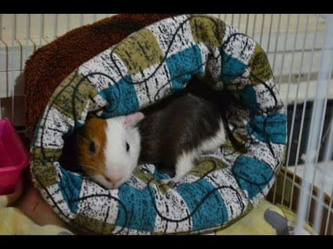 HOW TO MAKE A BED FOR YOUR PET   DIY- GUINEA PIG'S BED   - YouTube