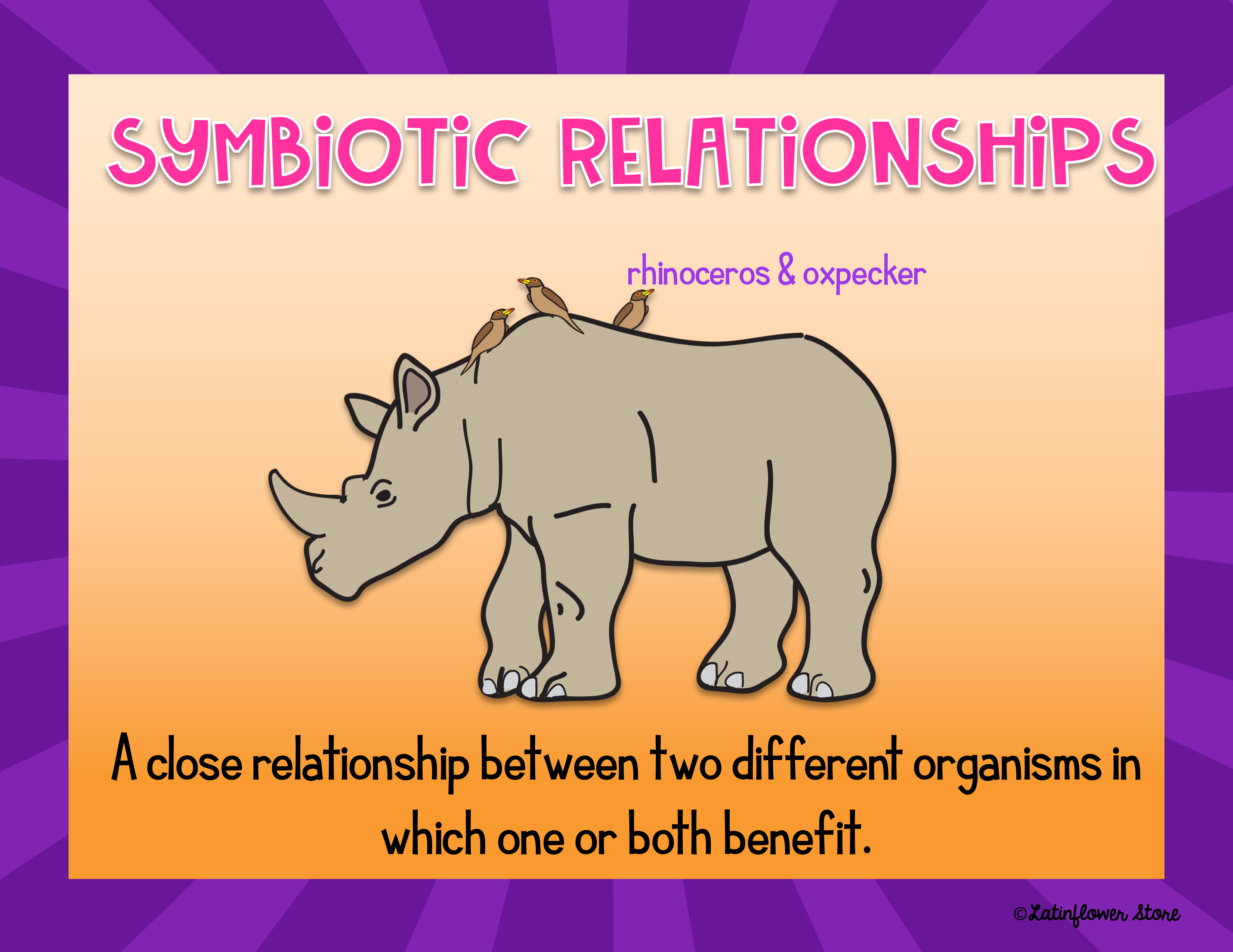 Symbiotic Relationships Powerpoint And Notes Symbiotic Relationships Relationship Powerpoint [ 2550 x 3300 Pixel ]