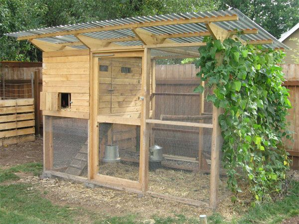 Chickens For Sale Buy Chicks For Sale Near You Efowl Chickens Backyard Easy Chicken Coop Backyard Chicken Coop Plans