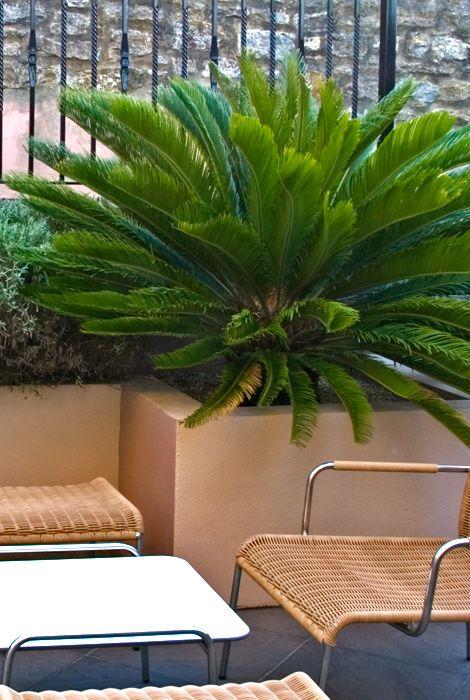 Palm Trees Contemporary Garden Cycas