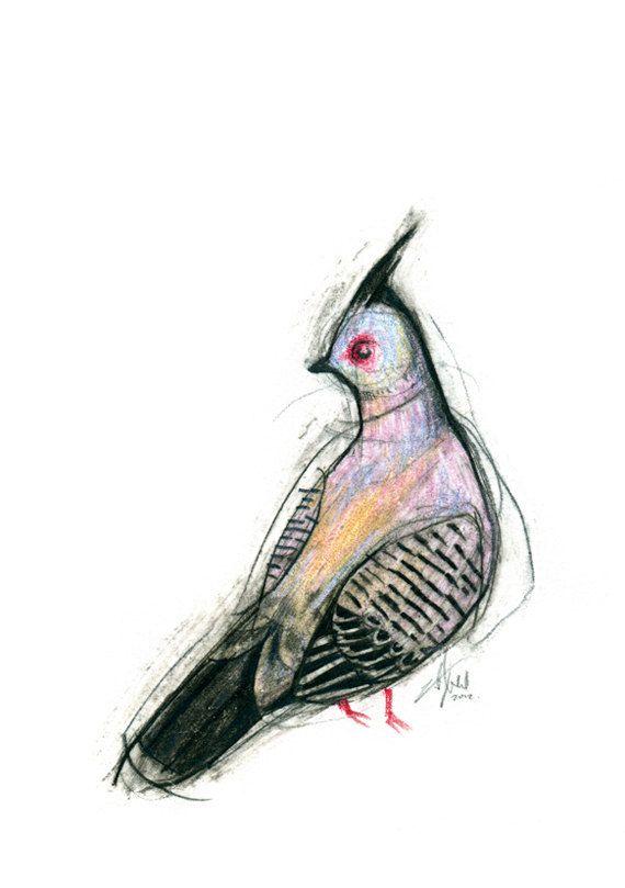 Australian Bird Print A5 Crested Pigeon by 56dollarsforbeancake, $13.50