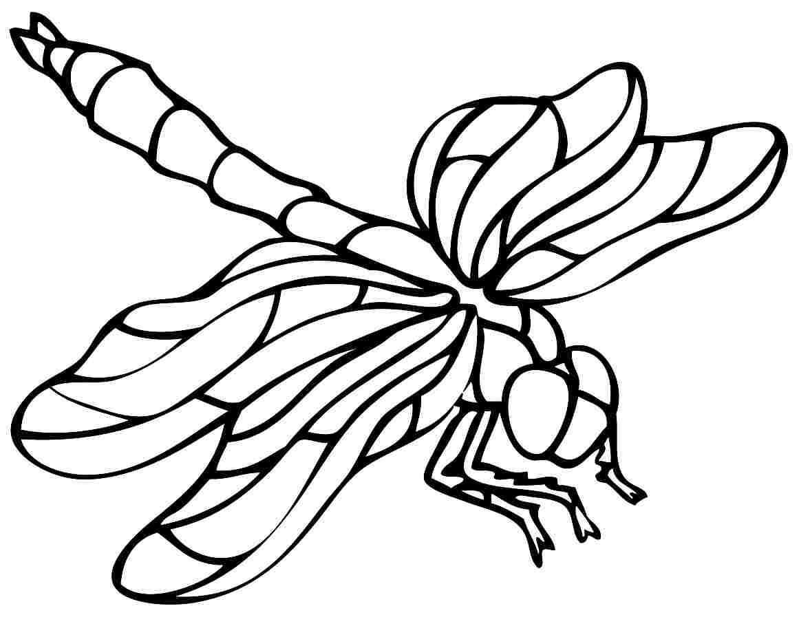 Dragonfly Insect Coloring Pages Coloring Pages Animal Stencil