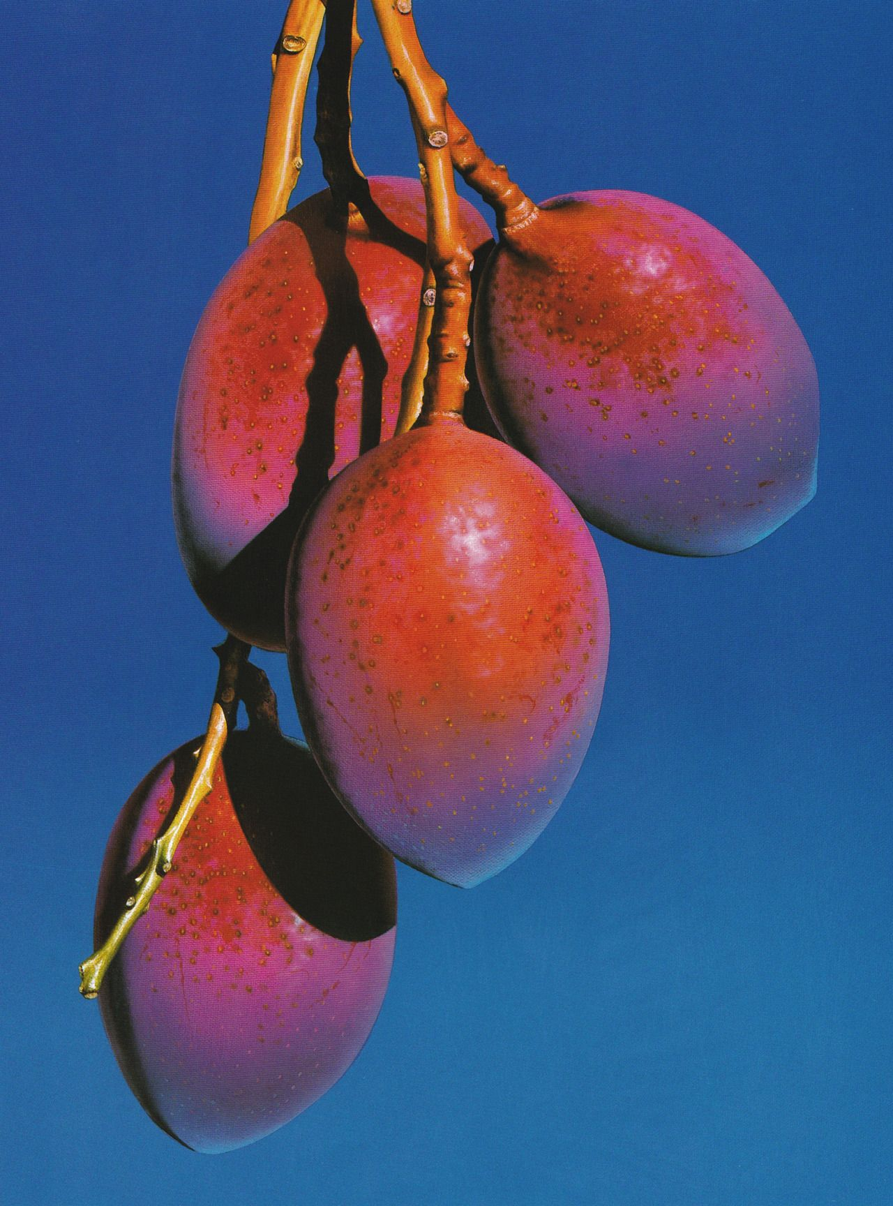 Agonist Parfums Color Of Life Photo Fruit