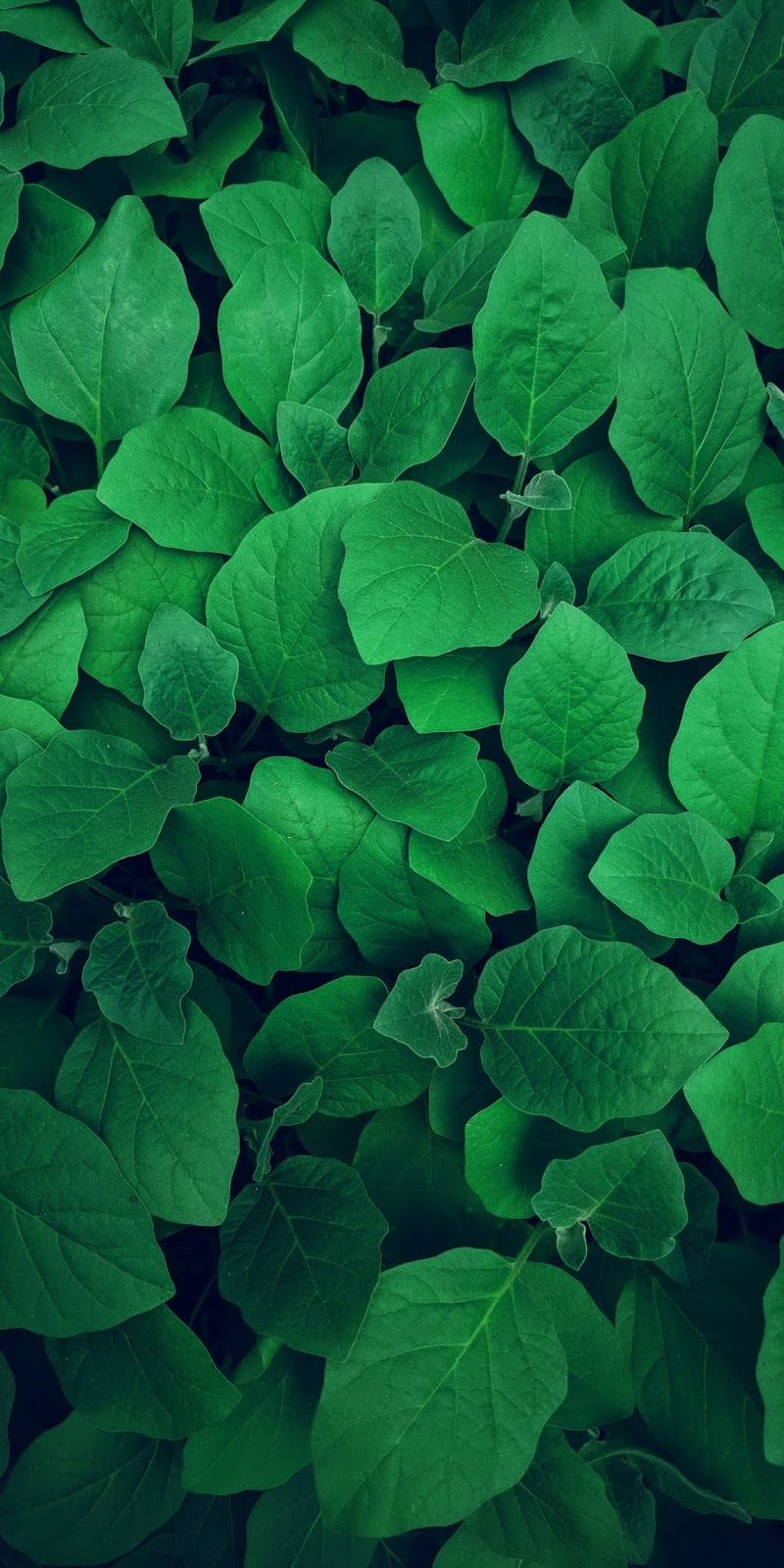 Leafs Wallpaper Iphone Android Green Pictures Green Aesthetic Dark Green Plants