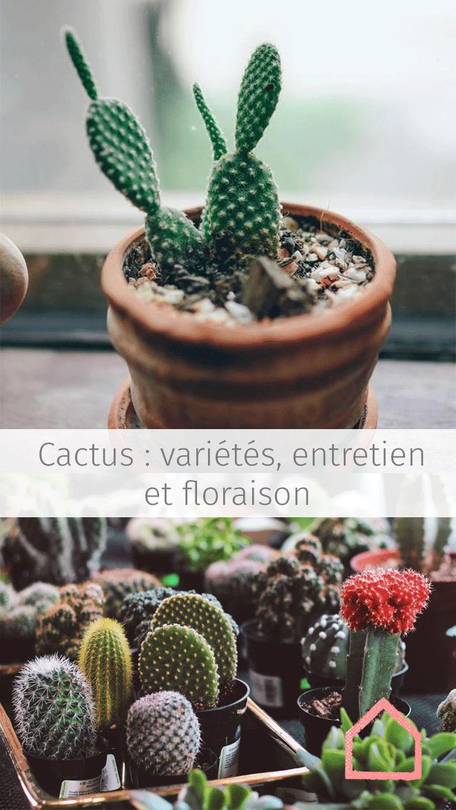 C Est La Plante Parfaite Pour Ceux Qui Ont Tendance A Oublier Les Arrosages Ou Qui Sont Souvent Partis Cactus Entretien Cactus Cactus Jardin