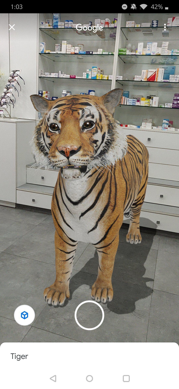 حديقة حيوان فى بيتك صور ولادك مع الحيوانات من منزلك 3d بهذه الخطوات Animals Wallpaper Tiger