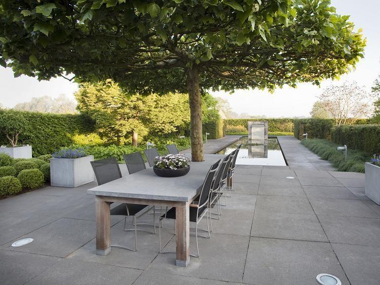 Parasolboom In Tuin : Grote parasolboom bomen en grote heesters garden garden design