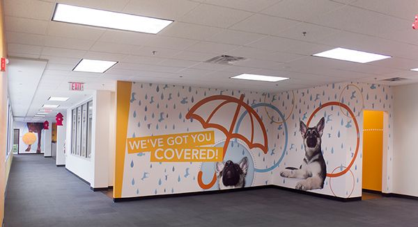 Fun wall graphics in office branding project for petplan for Office branding ideas