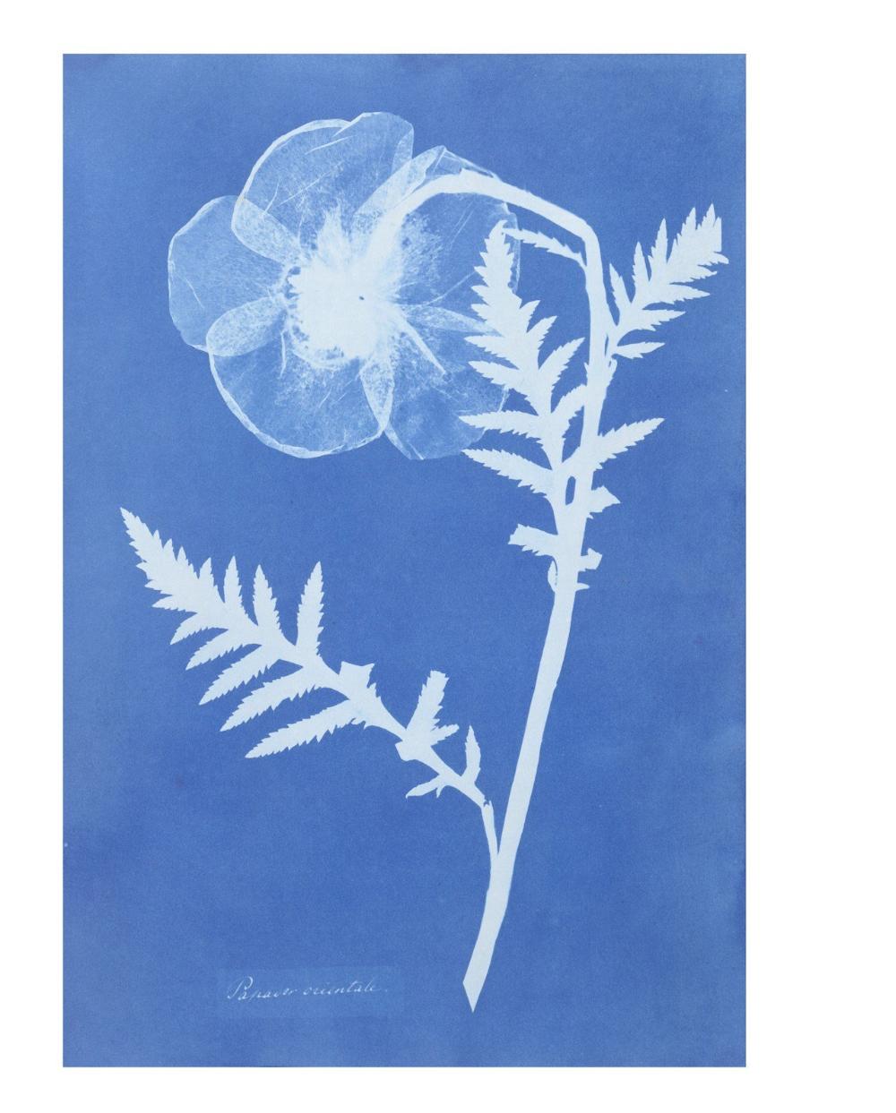La Historia De La Fotografía Resumida En 15 Fotógrafas Famosas Desconocidas Triunfadoras Invisibilizadas Y Algunas Que Son Ya In 2020 Sun Prints Cyanotype Atkins