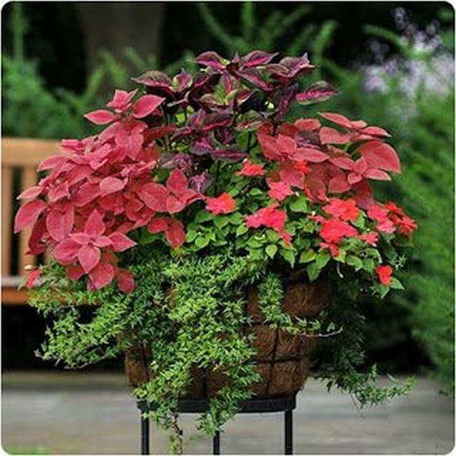 40+ Poinsettia Plant Decor Front Porches_9