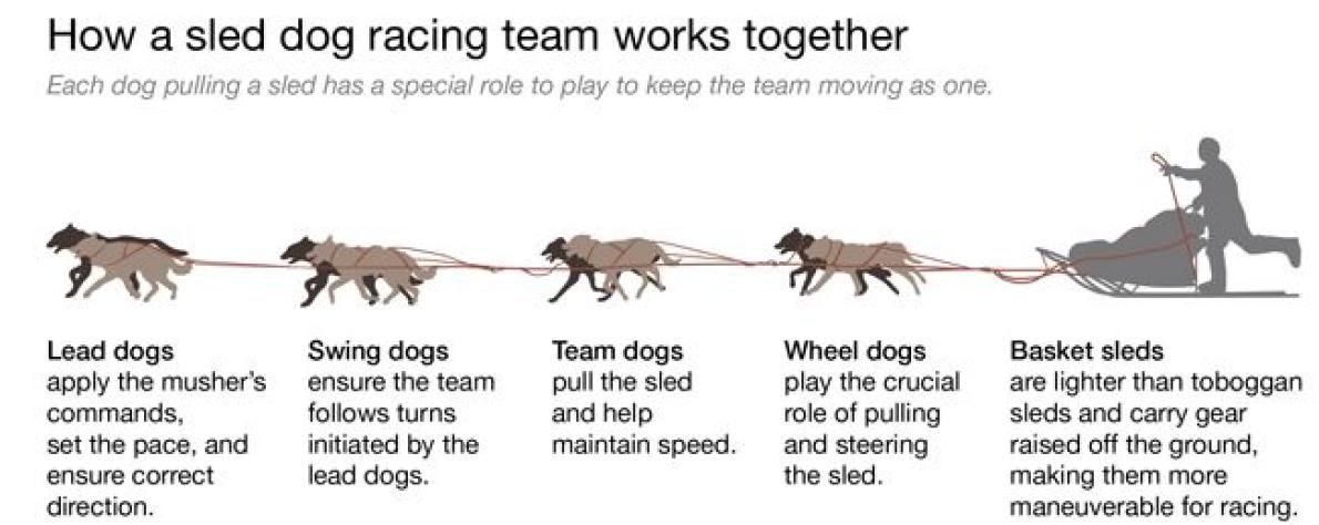 Dog Sled Team Drawing