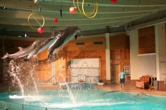 Särkänniemen delfiinit