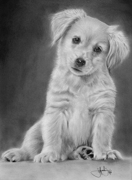 Golden retriever puppy drawing dessin noir et blanc pinterest peinture noir et dessin - Dessin golden retriever ...