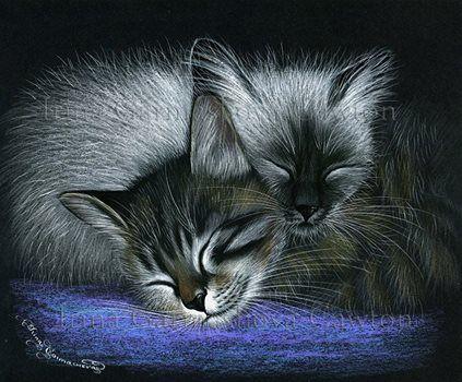 Two Black Noses Cats Illustration Cat Art Illustration Cat Artwork