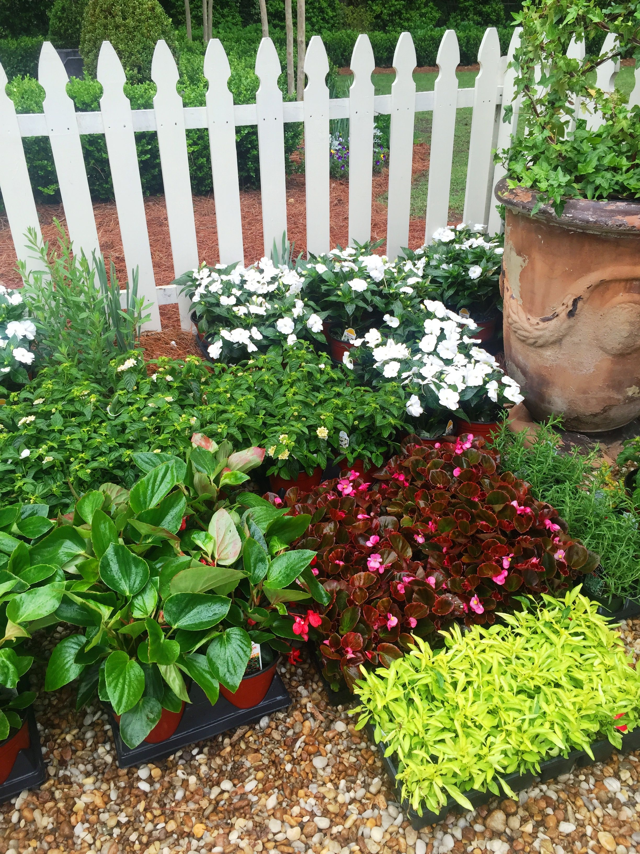 plants and flowers for landscaping - HD 2448×3264