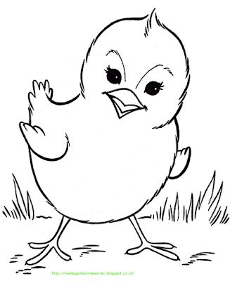 Mewarnai Gambar Ayam : mewarnai, gambar, Mewarnai, GAMBAR