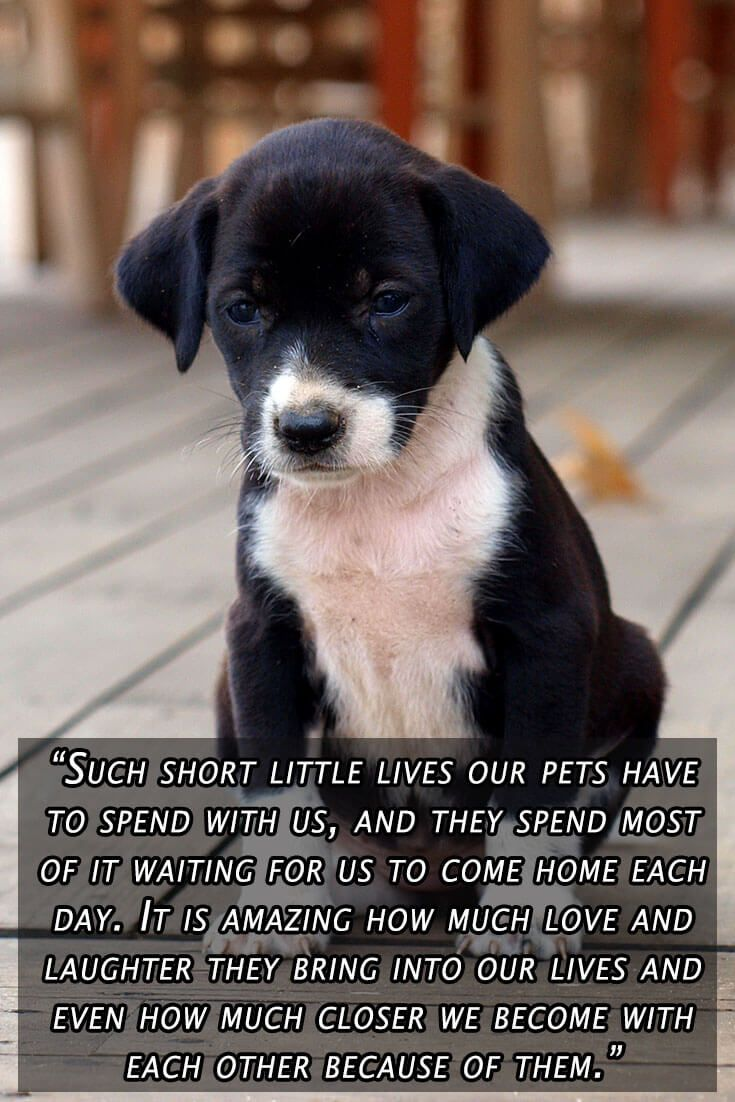 Funny Blog Posts Dog Quotes Dog Quotes Funny Cat Quotes Funny