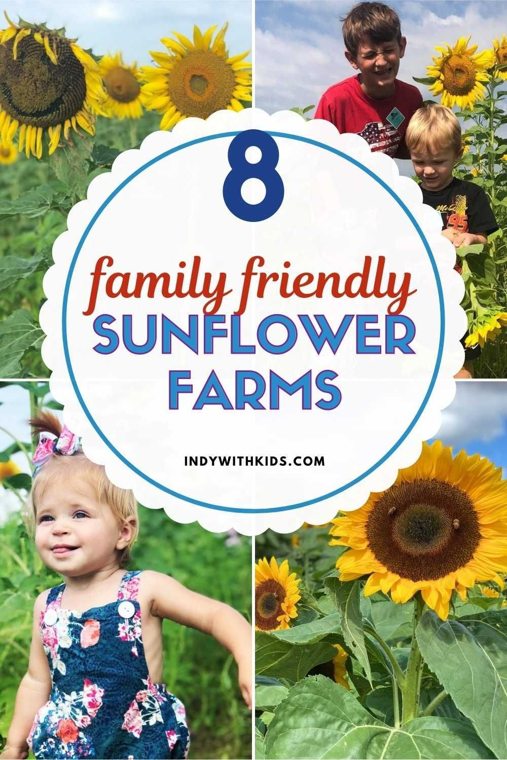 Events Near Indianapolis After Christmas 2020 8 Sunflower Farms Near Indianapolis + U Pick Flower Farms in 2020