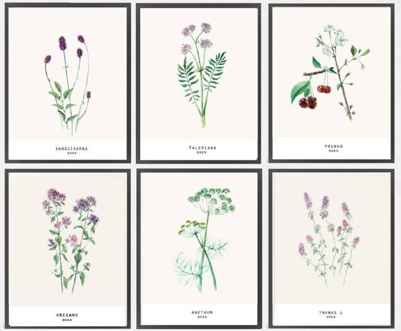 watercolor herb painting/set watercolorherb plant print/shabby rustic print/watercolor botanical print/Set of Painting /wall art watercolor by BeautyOfPrints on Etsy
