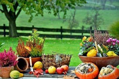 Que Faire Au Jardin En Novembre Journal Le Jardin Et La Femme