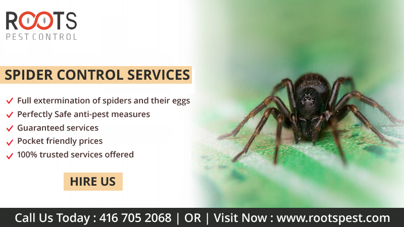 Spider Control Services in Toronto (With images) Spider