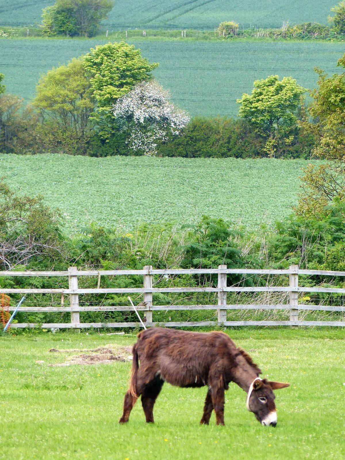 Pin by DeLynn Decker on ☆ DONKEY'S ☆ 2 | Donkey, Zorse, Male horse