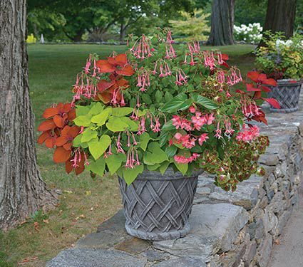 Hummingbird Annual Collection Container Plantscontainer