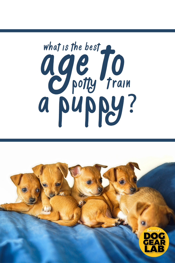 What Is The Best Age To Potty Train A Puppy In 2020 Puppy Training Potty Training Puppy Dog Biting Training