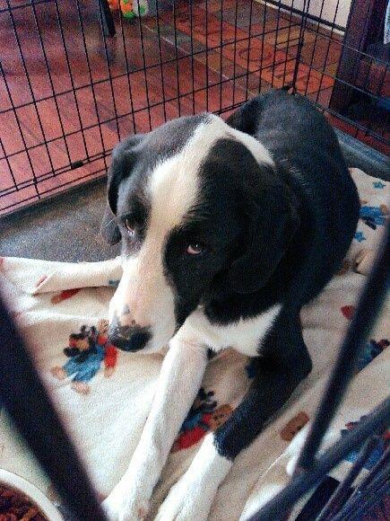 Tn Found Dog Injured Please Donate Share