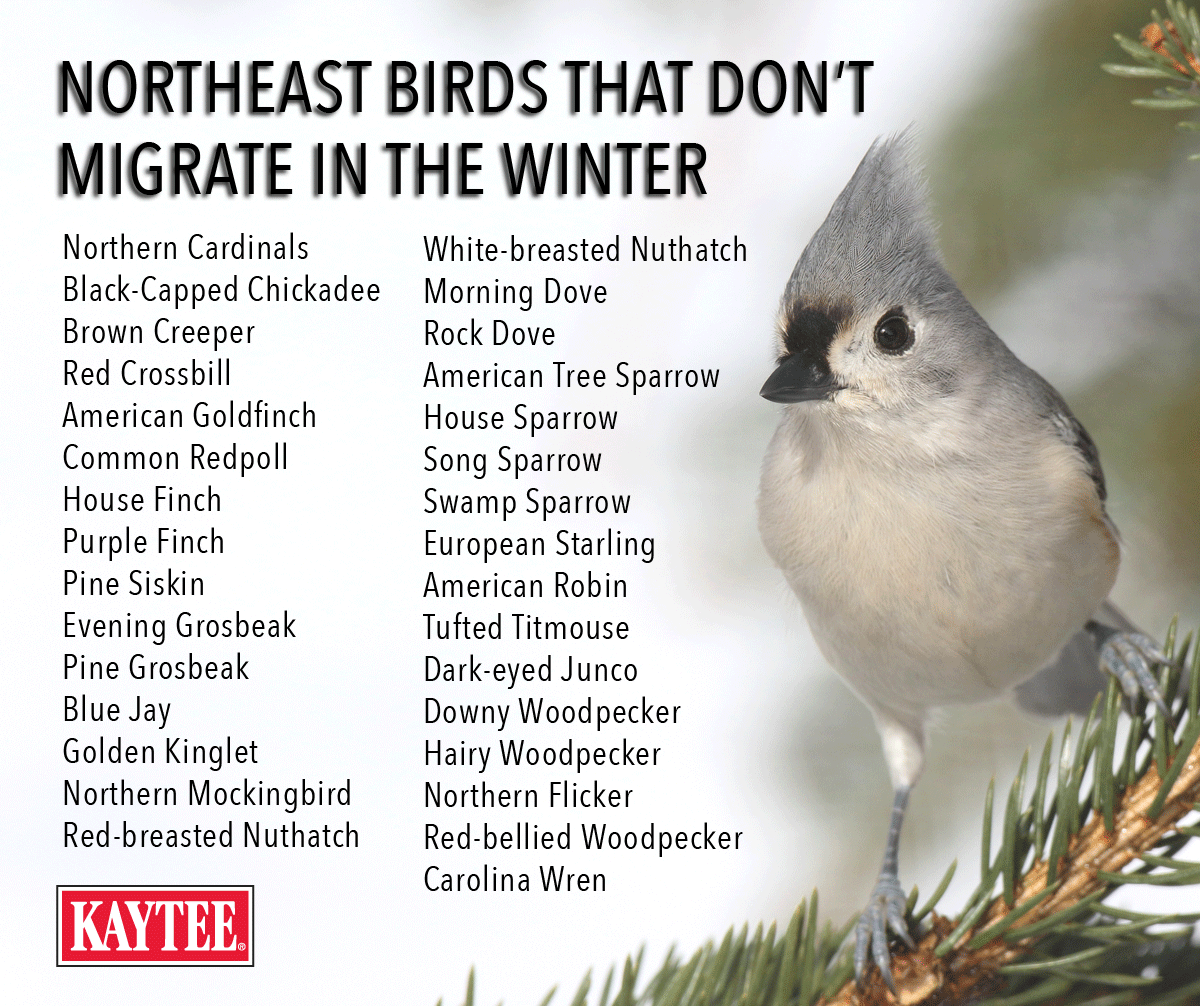 Birds That Do Not Migrate During The Winter Include Chickadees Titmice Downy Woodpeckers Blue Jays Song Sp Wild Bird Feeders Wild Bird Food Backyard Birds
