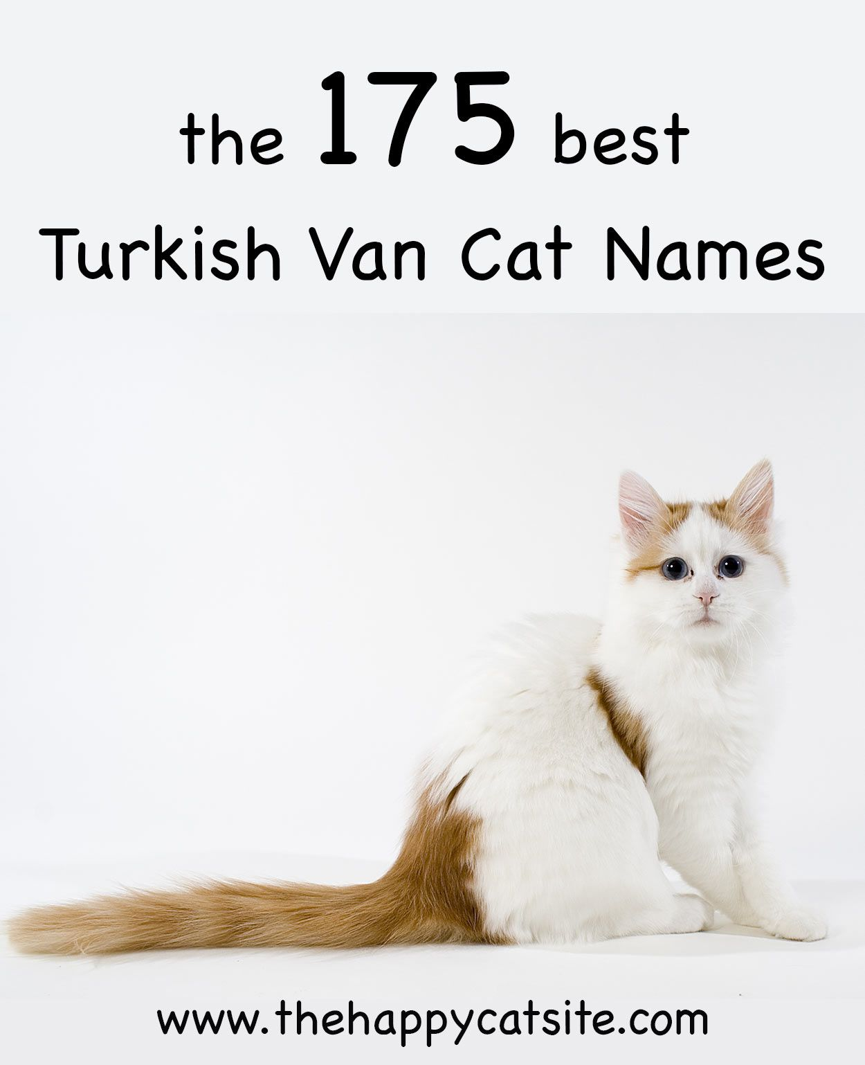 Turkish Van Cat Names 175 Unique Ideas Turkish Van Cats Turkish Van Cat Names