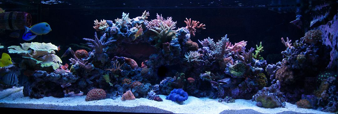 Aquascape Ideas 125 Gallon Reef Tank Aquascape