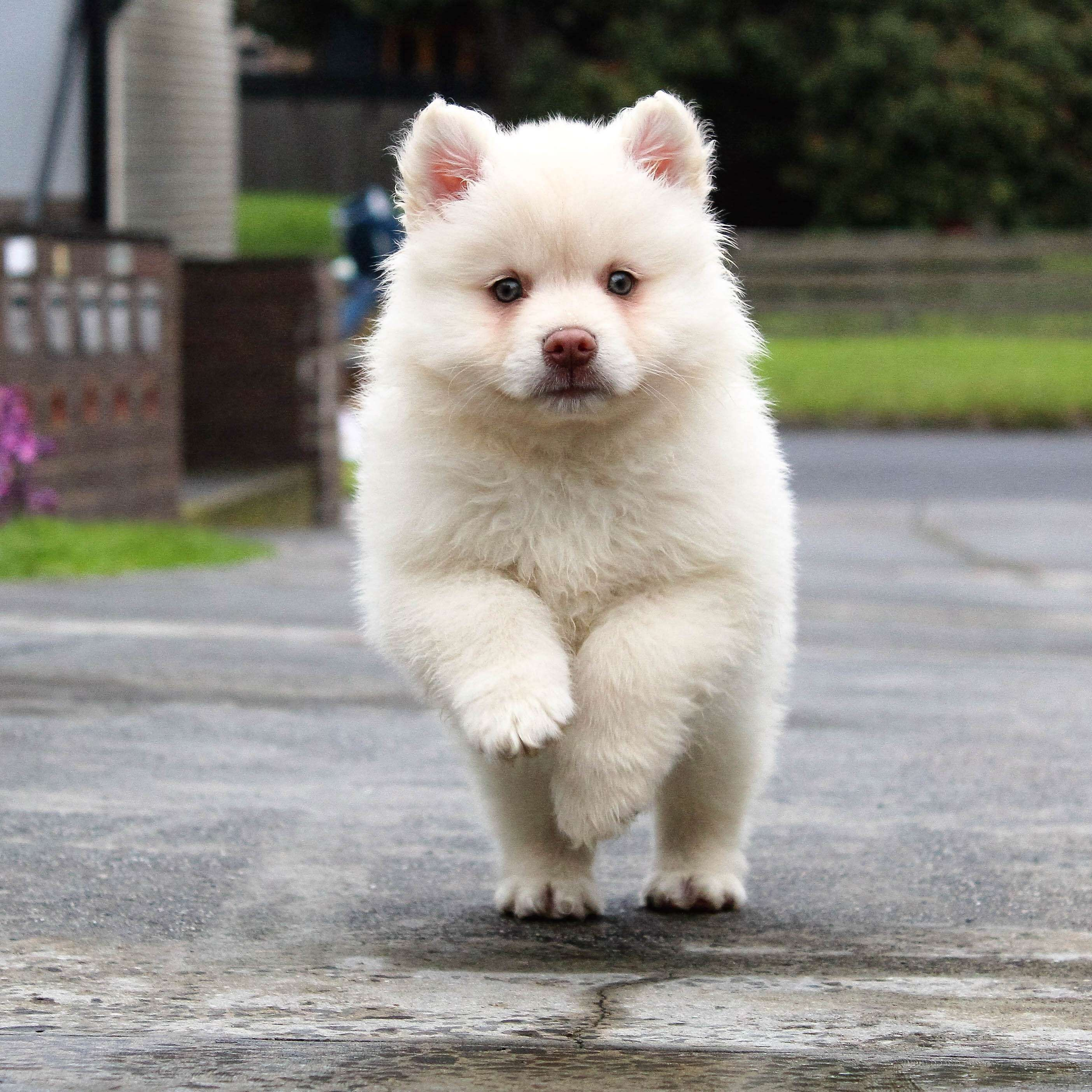 Active Adorable Animal Baby Breed Canine Cute Dog Dog