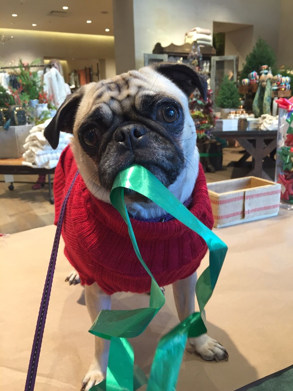 pug rescue austin