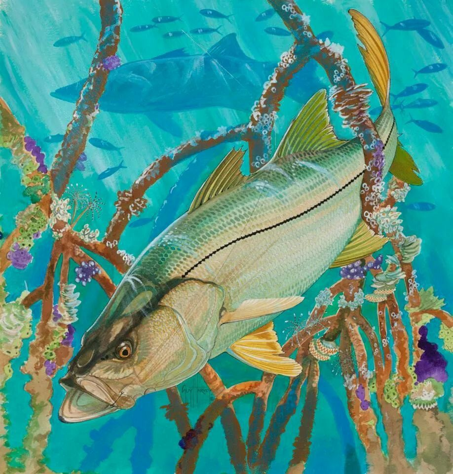 snook in the mangroves guy harvey favorite art pinterest fish fish art and wildlife art. Black Bedroom Furniture Sets. Home Design Ideas