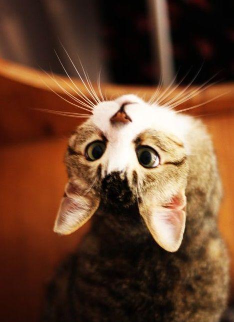 Lustige Katze Tumblr Katzen Kleine Katzen Und Susse Tiere