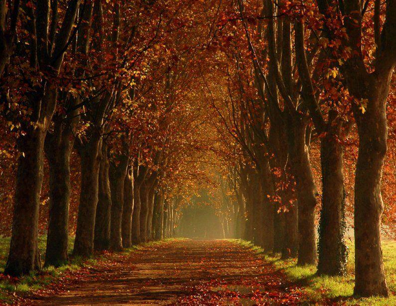 paisajes extraordinarios   Paisaje de otoño, Café de otoño y Otoño