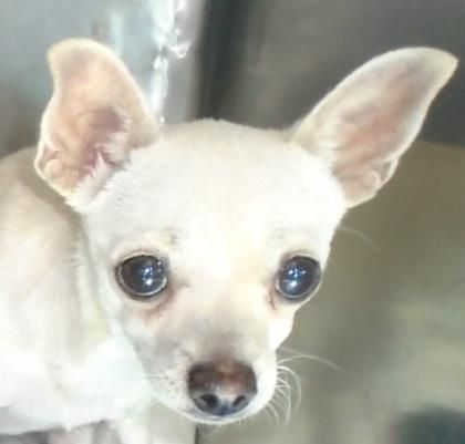 Bonita Located In El Paso Tx To Be Destroyed 12 13 2016 Puppy