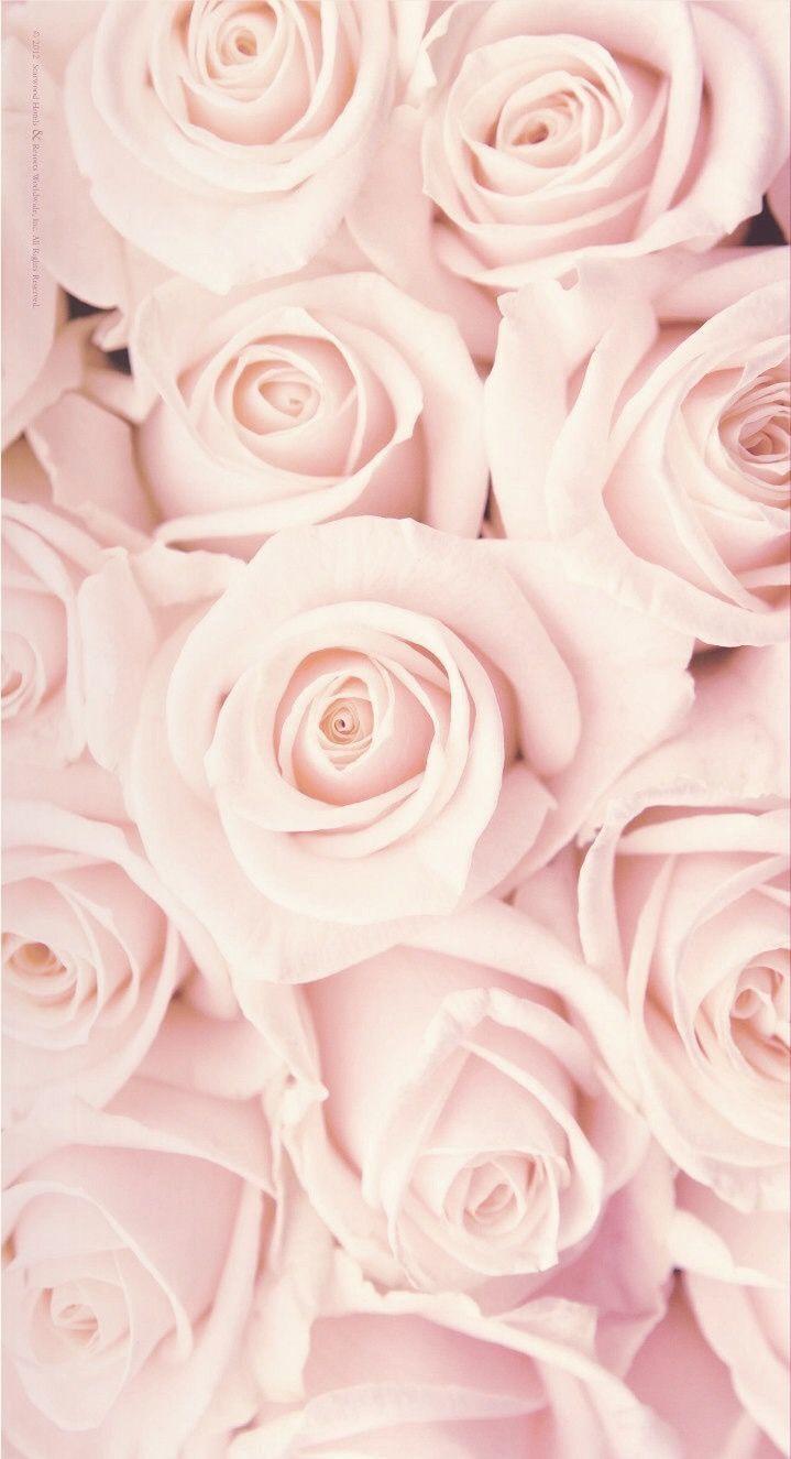 fond decran fleur fond